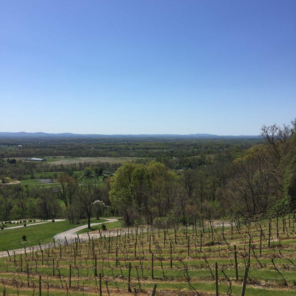 Wine tasting in Northern Virginia | A review of Bluemont Vineyard and Casanel Winery & Vinyard | Northern Virginia Wineries