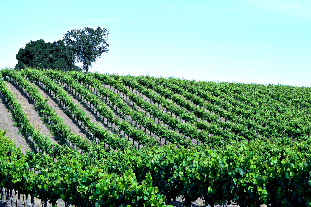 Santa Ynez Valley, California - Wine regions around the world