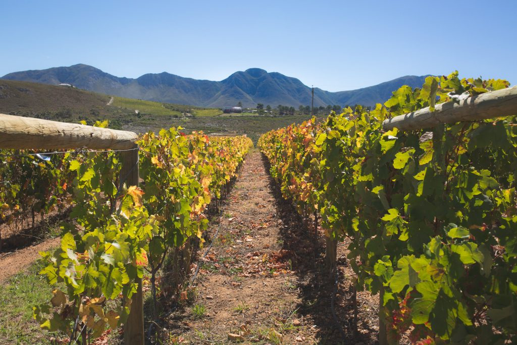 Hemel en Aarde, South Africa - best wine regions in the world