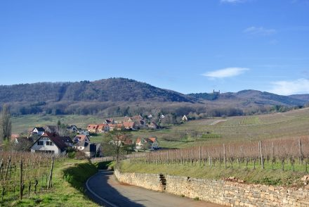 Alsace Wine Route road trip
