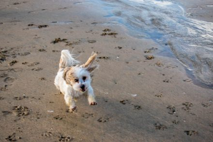 Find out what it's like travelling with a dog - we're sharing our stories after six months.