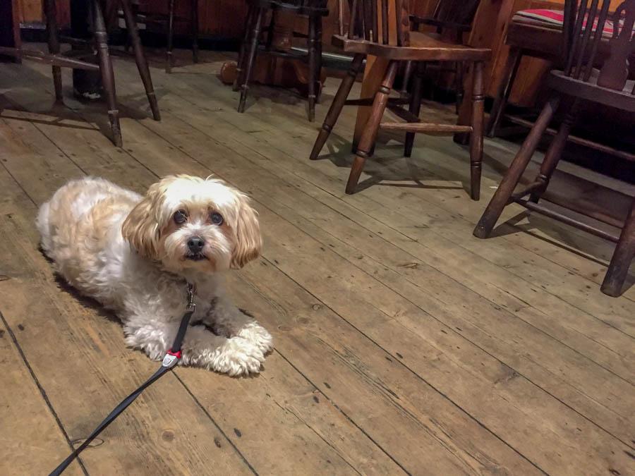 Giorgio, A Pair of Passports traveling dog