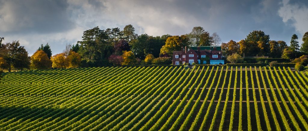 Hambledon Vineyard - one of the top wineries in England. Visit for wine tasting in England.