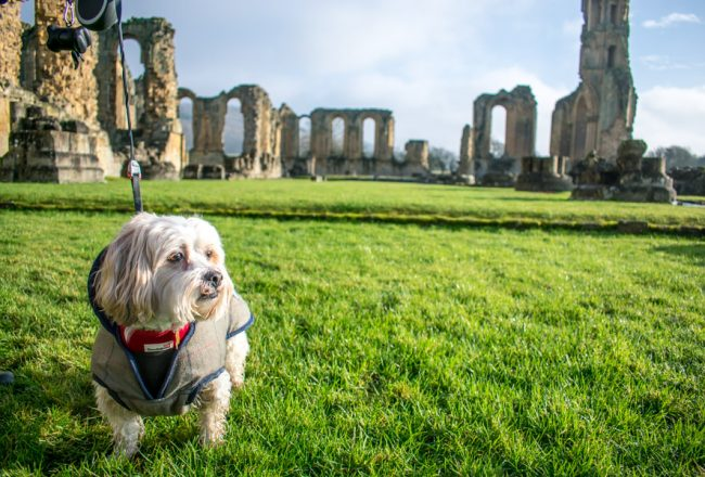 What to Pack for Dog Friendly Travel | Travel Accessories for Dogs | Essential Items for Travelling with a Dog