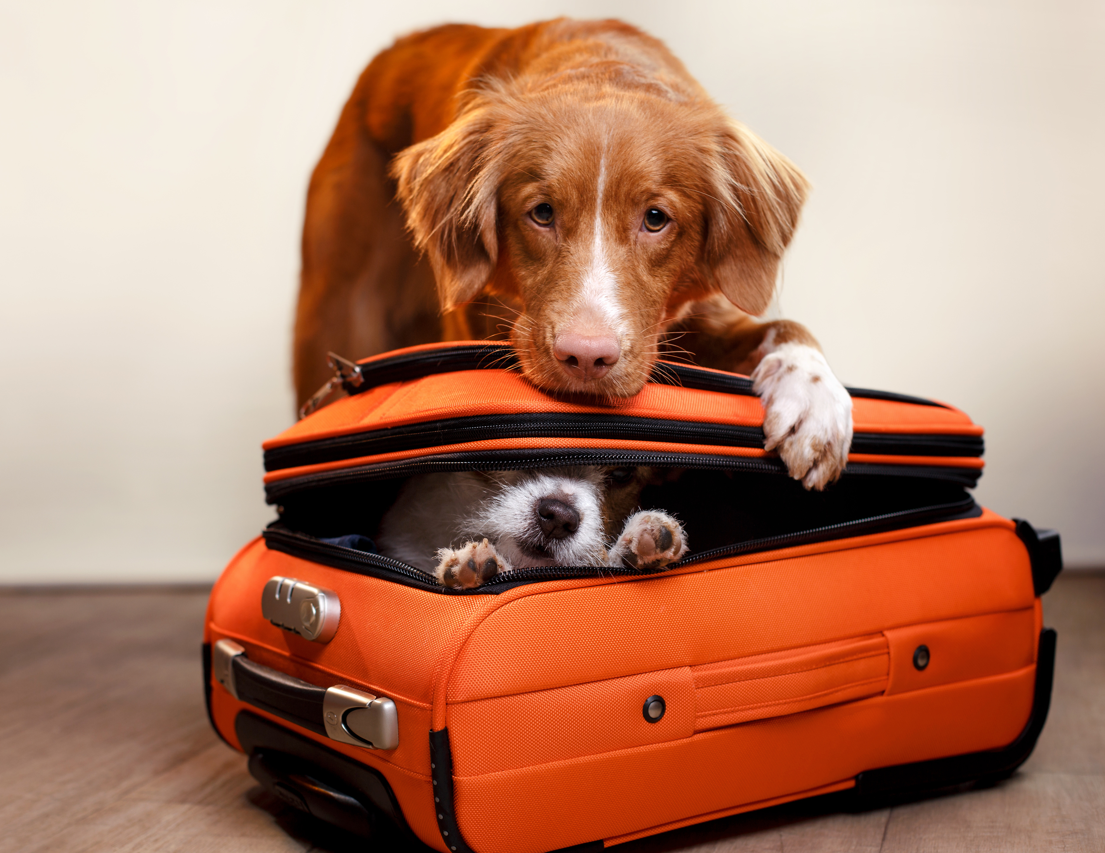Dogs With Suitcase Dog Friendly Accommodation In London