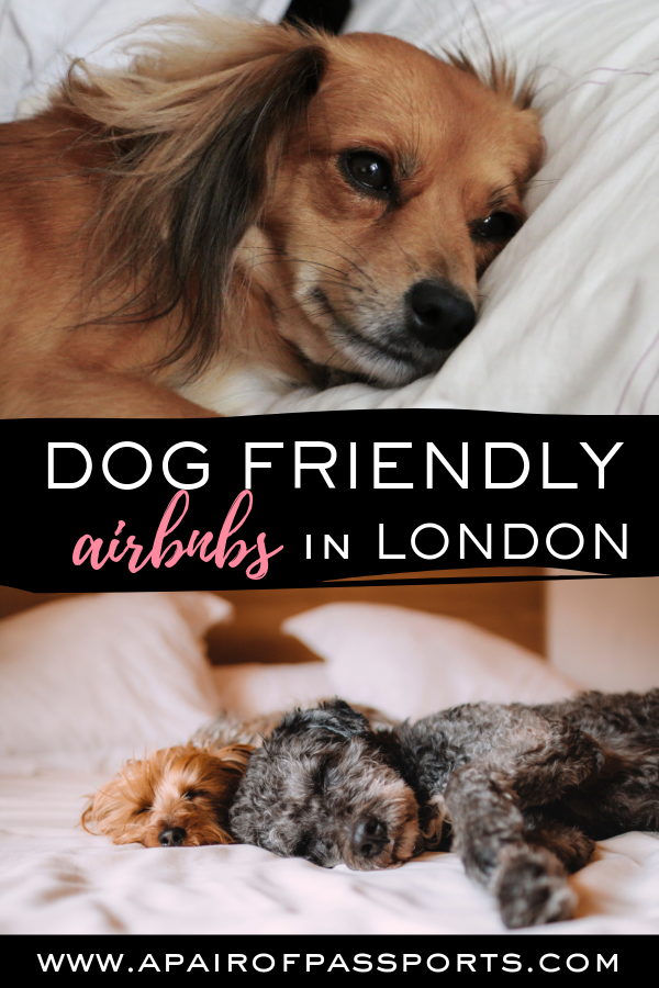 Dog-Friendly Accommodation in London - Where to stay in London with your pet