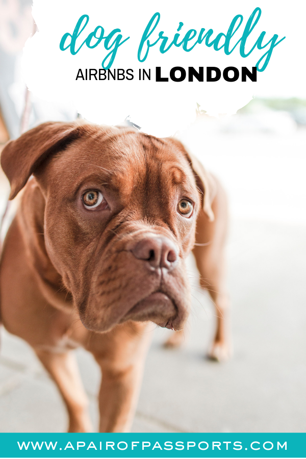 Dog-Friendly Airbnbs in London - Where to stay with your Dog in London